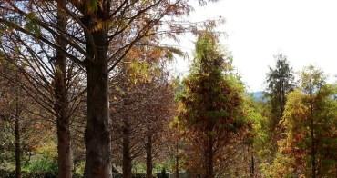 【台中。旅遊】東勢梨之鄉休閒農業區落羽松IG打卡熱門景點--心有林畦