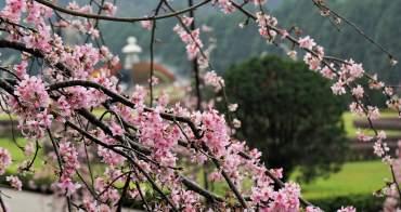 【南投。旅遊】賞櫻最前線--九族文化村櫻花祭搶先報
