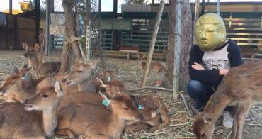 屏東景點︳鹿境梅花鹿生態園區-墾丁小奈良,親子旅遊必來恆春小鹿亂撞