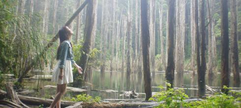 【南投。杉林溪】忘憂森林,精靈居住的人間仙境,讓人流連忘返...