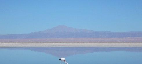 智利沙漠行程 火烈鳥的天堂,高原湖泊Lagunas Altiplanicas & Salar!沙漠冒險Day2。阿塔卡馬沙漠San Pedro De Atacama
