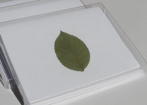 Pack of 5 Blank Designer Leaf Note Cards, Cotton Linen Paper, Cotton Linen Envelope, Pressed Plants, Green Leaf Note Card, Blank Note Card