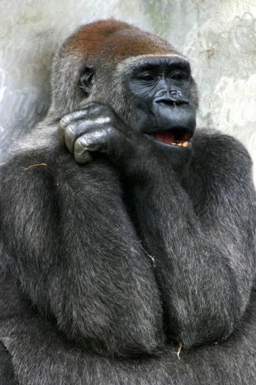 【おもしろ画像】あらゆる動物たちのいろいろな面白い画像を集めてみましたww 04