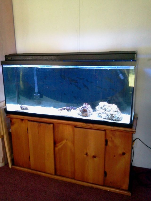 55 gallon fish tank oak stand 55 gallon aquarium with for 55 gallon fish tank for sale