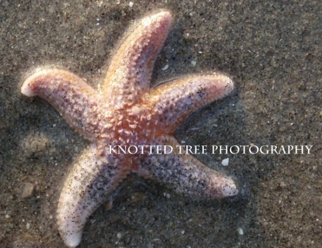 Fine Art Print 8x10 - Starfish