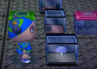 Image   Jellyfish tank.PNG   Animal Crossing Wiki