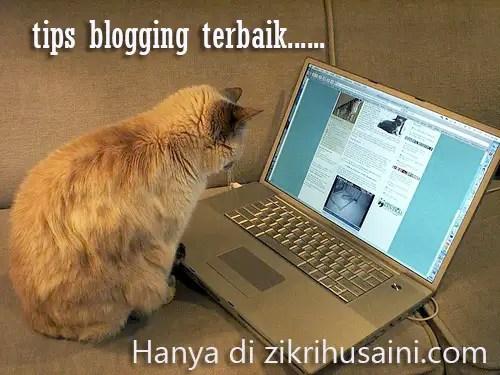 cat blogging, kucing main computer, cat blogging, picture cat, kucing cute