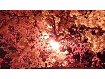 清水公園☆夜桜☆_20160405_1