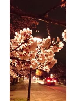 清水公園☆夜桜☆_20160405_3