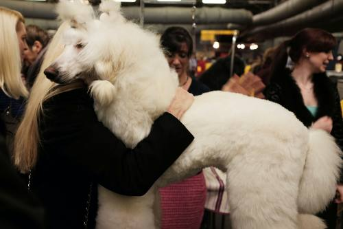 Medium Of Most Loyal Dog Breeds