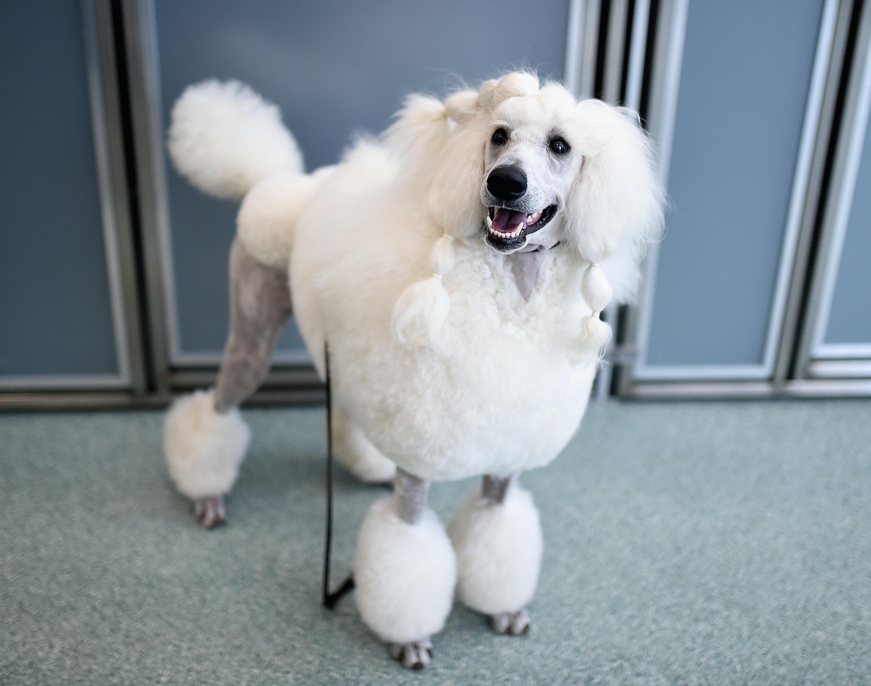 Favorite 6cc30540 F720 49a7 Ba2d D8880c9c0f26 Getty 656124340 Mellow Loyal Dog Breeds Mellow Dog Breeds Families bark post Mellow Dog Breeds