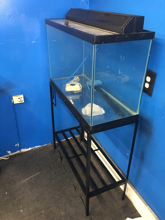 29 gallon Aquarium fish tank $100