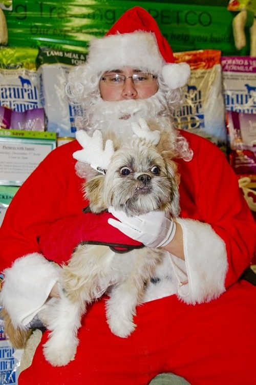Dog photo with Santa Funny