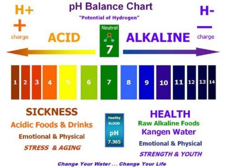 List of Alkaline Foods - The pH Balanced Diet