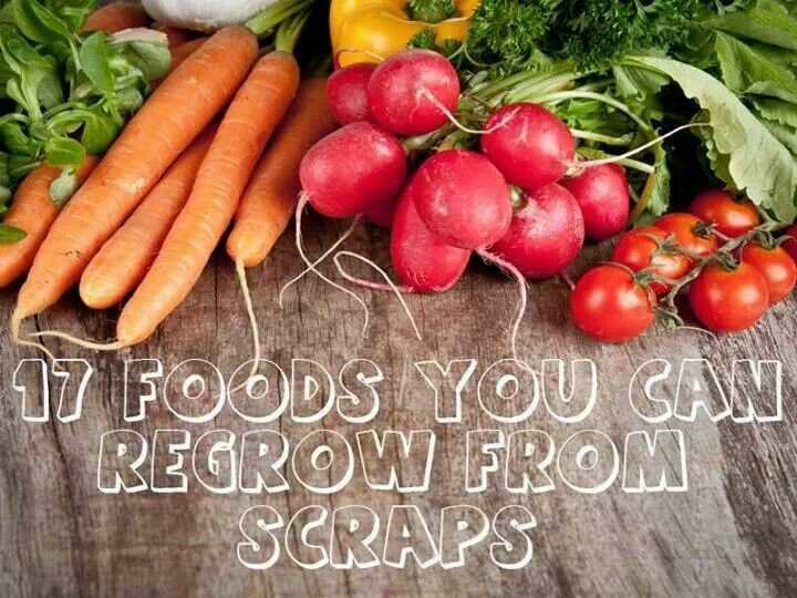 17 Plants You Can Regrow From Kitchen Scraps  in5d.com