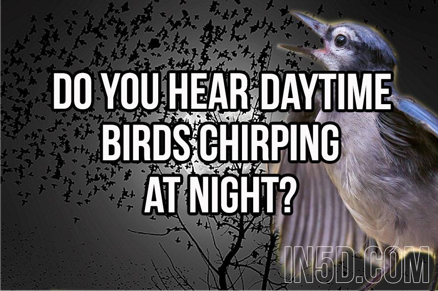 Do You Hear Daytime Birds Chirping At Night?  in5d in 5d in5d.com www.in5d.com http://in5d.com/ body mind soul spirit BodyMindSoulSpirit.com http://bodymindsoulspirit.com/