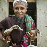 Bangladeş'de çiftçiler tavuk yerine ördek beslemeye başlamıştır. Çünkü sel baskını olduğunda ördekler yüzebiliyor.