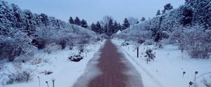 Twilight Snow (Botanic Gardens, Denver, CO)