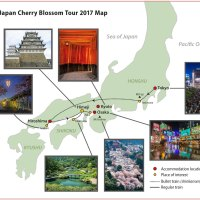 Classic Japan Cherry Blossom Tour