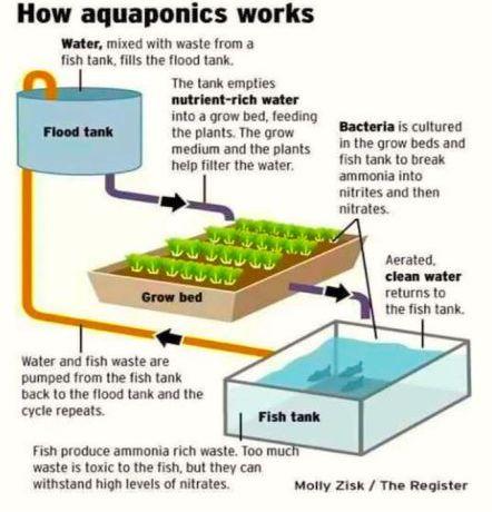 #2. Aquaponics
