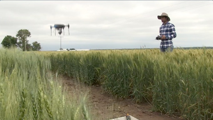 Drones patrol wheat fields in Kansas. (Photo by Conrad Kabus)