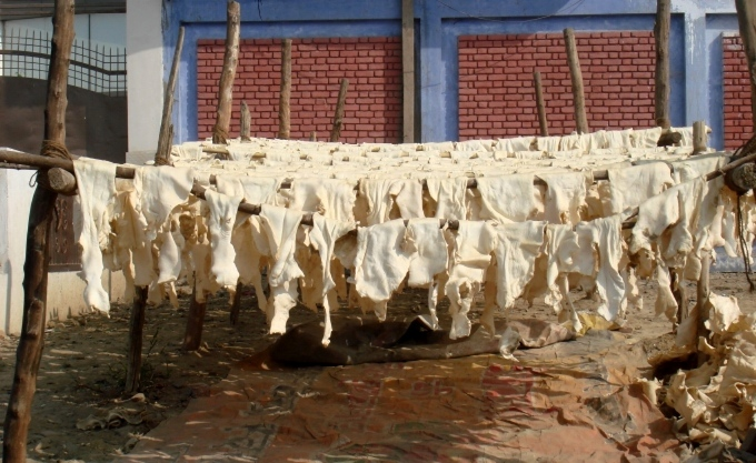 A tannery unit at Jajmau (Image by Juhi Chaudhary)