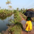 Sinking dreamland: sea reclaiming islands in Kerala backwaters