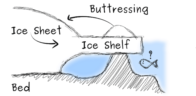 An ice rise stabilises the system by buttressing the ice shelf [image by Reinhard Drews]