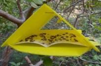 Yellow inspect strap pp sheet