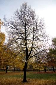 Berlin - Monbijou Park