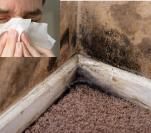 black mold symtoms
