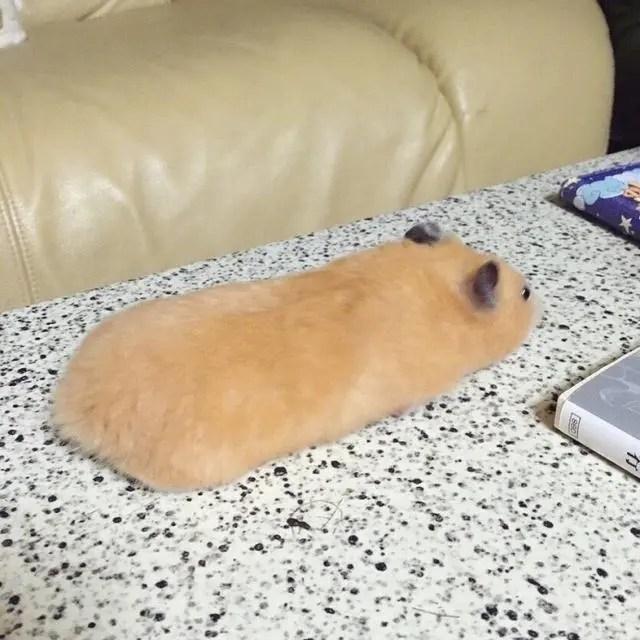 日本男子朋友圈晒了一只老鼠,好友纷纷说他「奢侈」!