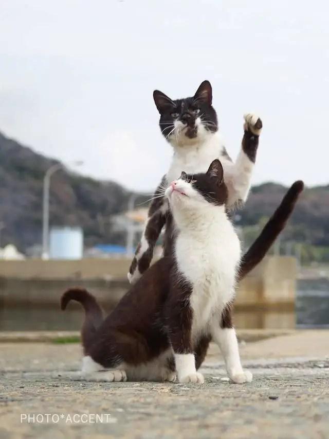 動態貓咪拍攝 生動展現貓咪靈活的美姿