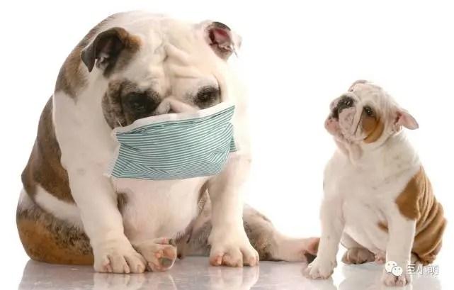 你抽个烟,狗狗说不定就过敏了