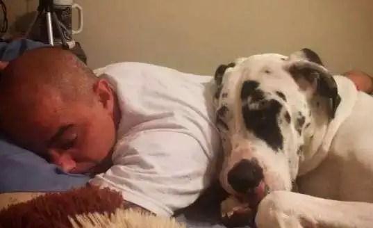 狗狗对你有这几种表现,证明狗狗真的很爱你!