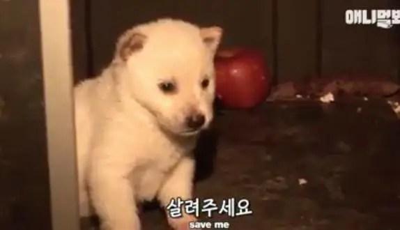 阿拉斯加为什么每天都会绑架小奶狗?真相让人心酸