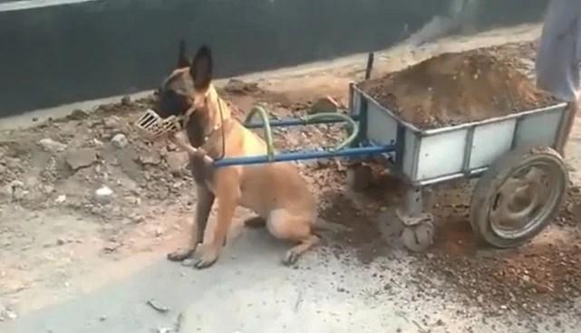 狗与狗的差距,有的狗主人抱着走路,而这狗却让人心酸