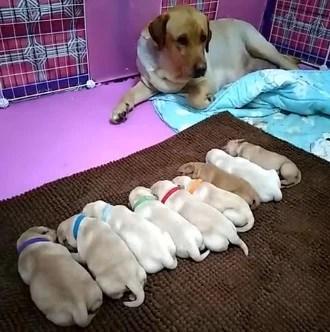 狗妈妈生了一堆小狗狗,连睡觉都得守着,真是不容易啊