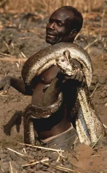 非洲土着耕地被5米巨蟒盯上,结果只能让人佩服非洲兄弟