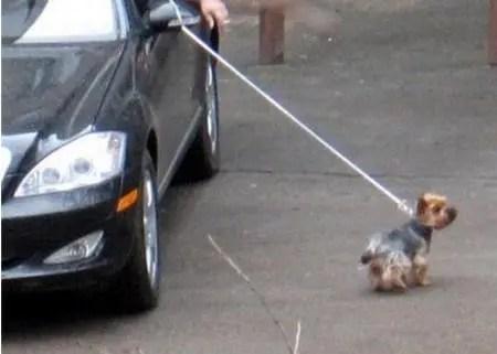 开着大奔遛狗,原本想要理论,却没想到还是大团圆结局