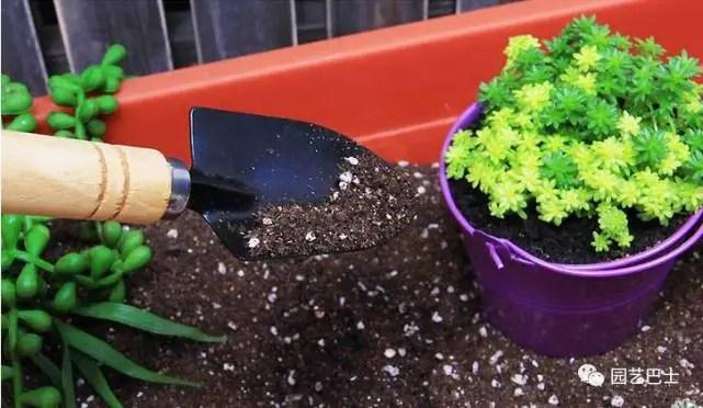 家庭養花需要什麼工具?園藝巴士教你養花!