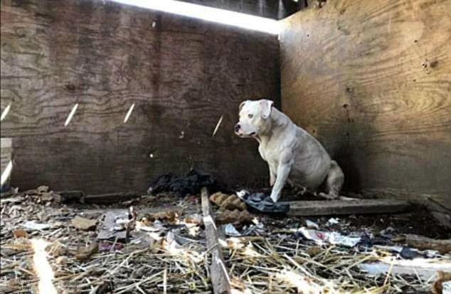 狗狗被锁在屋檐下5年,为了逃走,它不惜放弃了右脚