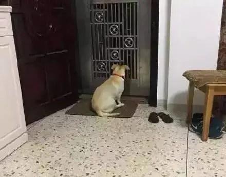 狗狗的哪个瞬间,让你觉得它真的很爱你?