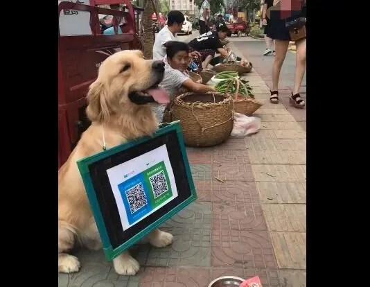 狗狗没钱吃饭,上街给路人扫一扫,收穫满满!