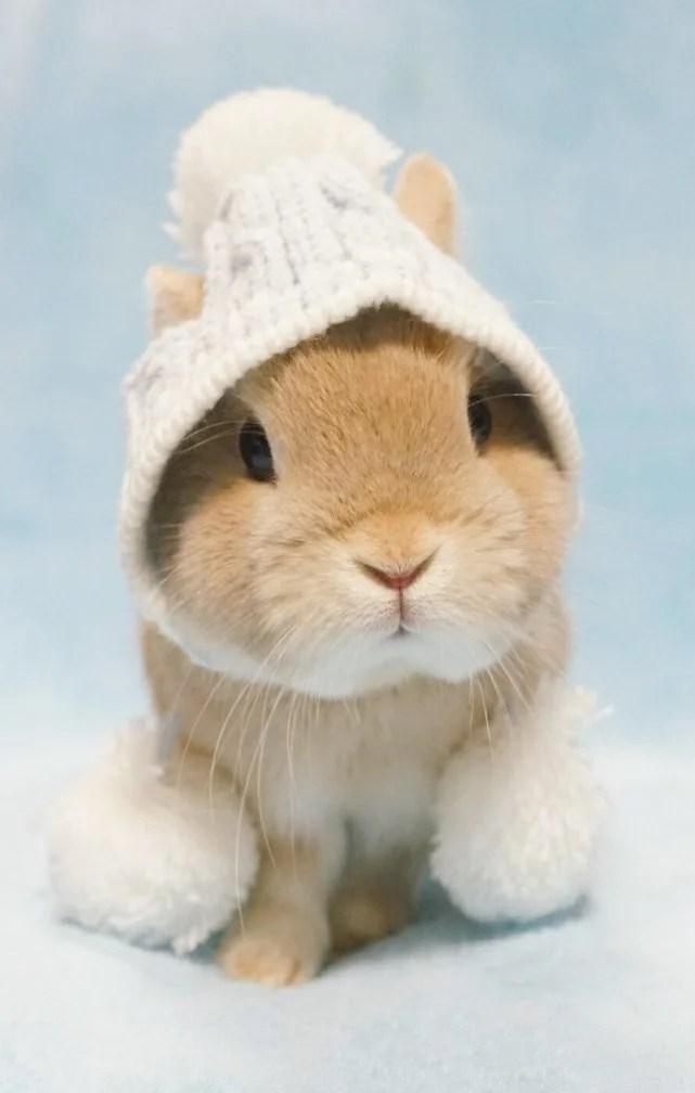不要被这只兔纸萌坏了