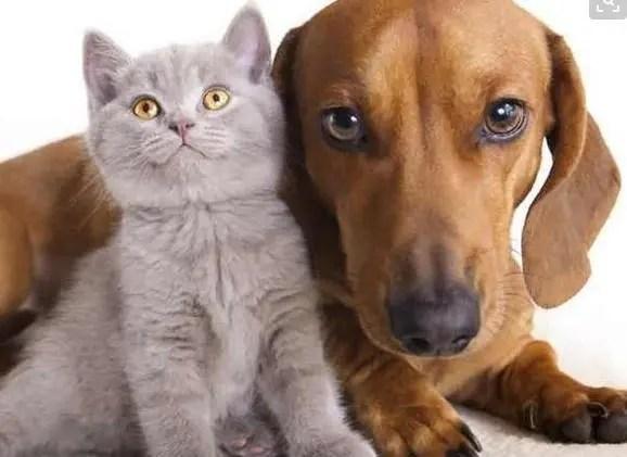 为何我家狗狗比猫更衷心?猫天生就是自私的吗?