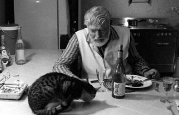 「貓的晚餐」的圖片搜尋結果