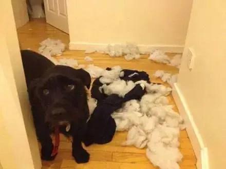 狗狗犯錯時那委屈的眼神,你捨得罰它嗎?