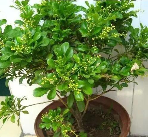家居養花:養花的誤區你知道嗎?養不好花也許不是你的錯!