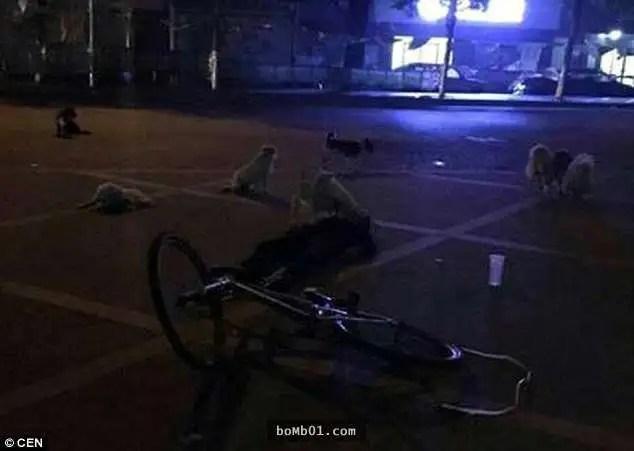 拾荒老婆婆意外猝死倒在馬路上,但守護在她身邊不肯離去卻是它們